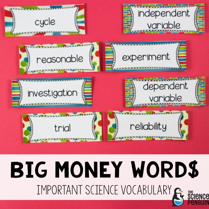 words science money word wall terms using important middle term penguin experiment thesciencepenguin things
