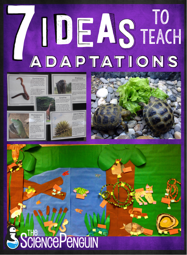 7 ideas to teach animal adaptations the science penguin. Black Bedroom Furniture Sets. Home Design Ideas