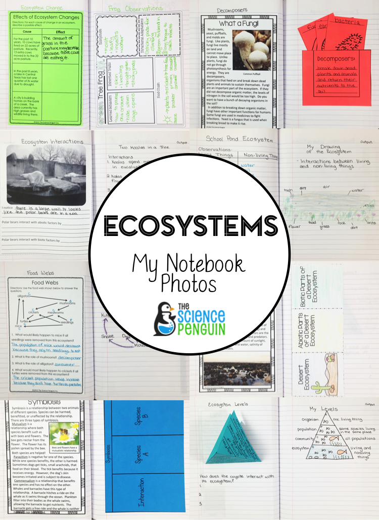 It is a picture of Free Printable Ecosystem Worksheets inside 1st grade