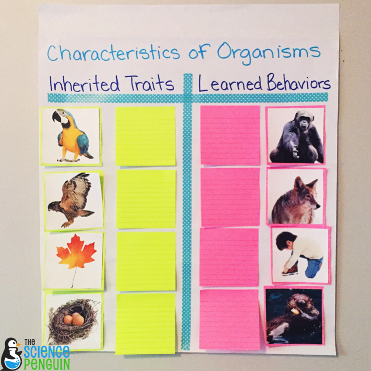 Collaborative Anchor Charts For Science Vocabulary Inherited Traits And Learned Behaviors Example